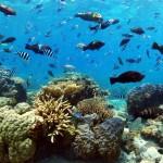 Amedee Island Reef
